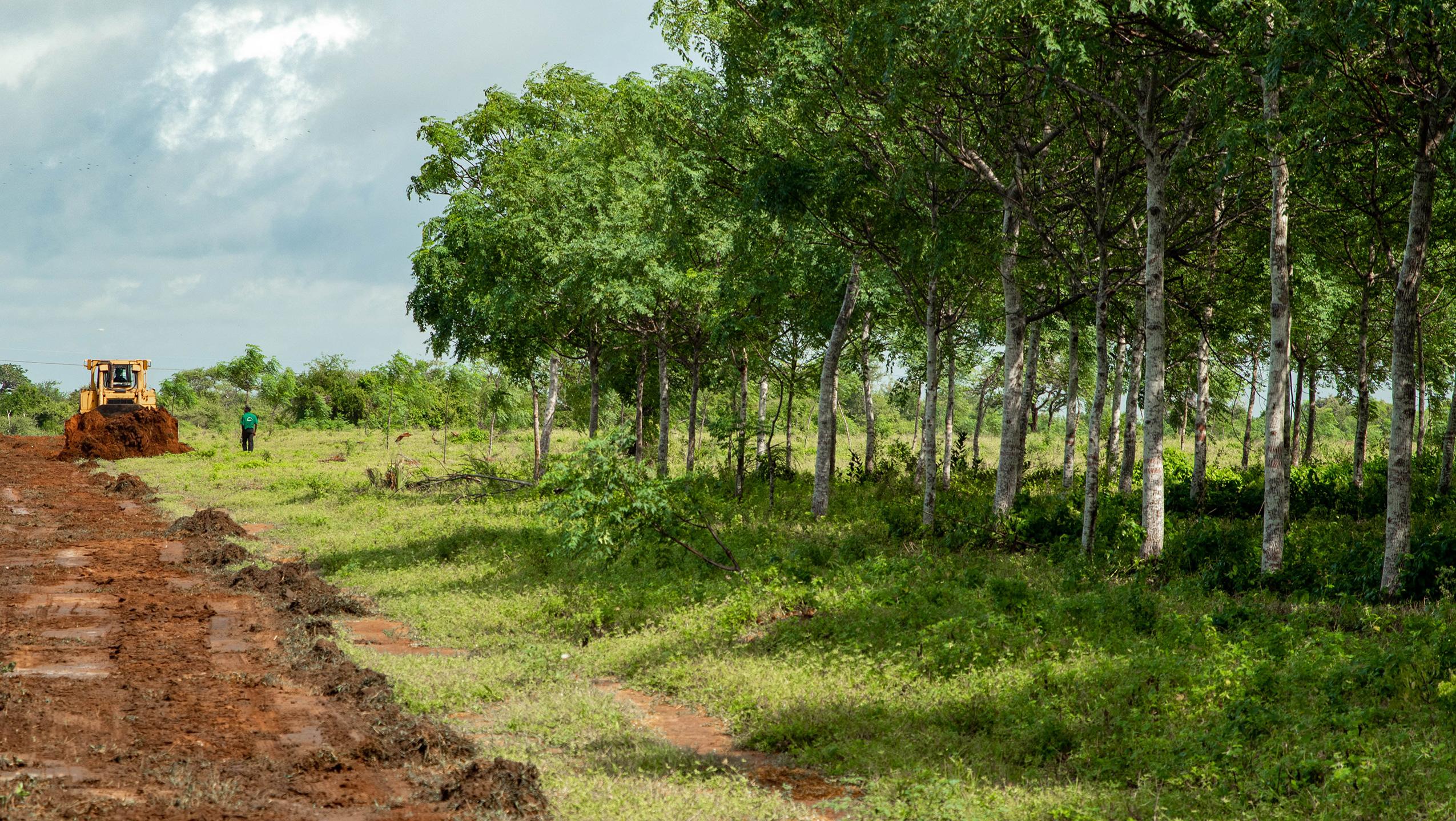 Treplanting reduserer klimatrusselen